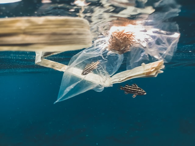 A clear plastic bag floating in the sea with a small fish trapped inside.
