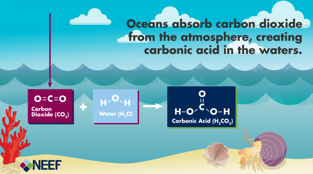 Short infographic on the oceans absorbing carbon dioxide